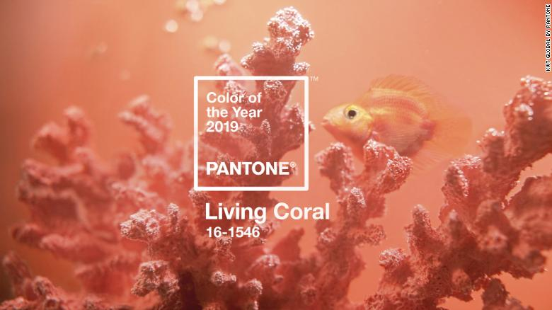 living coral_wallxscape